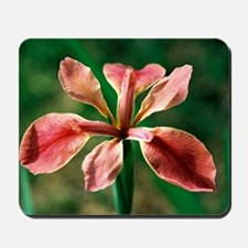 Louisiana Iris - Mousepad