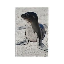 Sea Lion 4 Rectangle Magnet