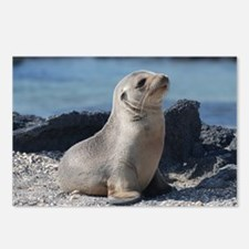 Sea Lion 3 Postcards (Package of 8)