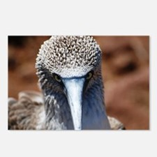 Blue Footed Boobie Close-Up Postcards (Package of