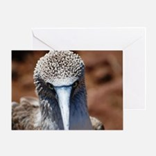 Blue Footed Boobie Close-Up Greeting Card