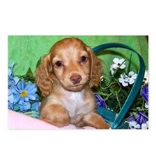 Puppy basket Postcards (Package of 8)