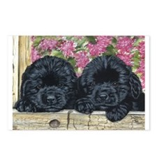 Cute Black newfoundland Postcards (Package of 8)