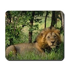 """Big African Lion"" Mousepad"