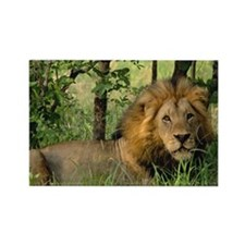 """Big African Lion"" Rectangle Magnet"