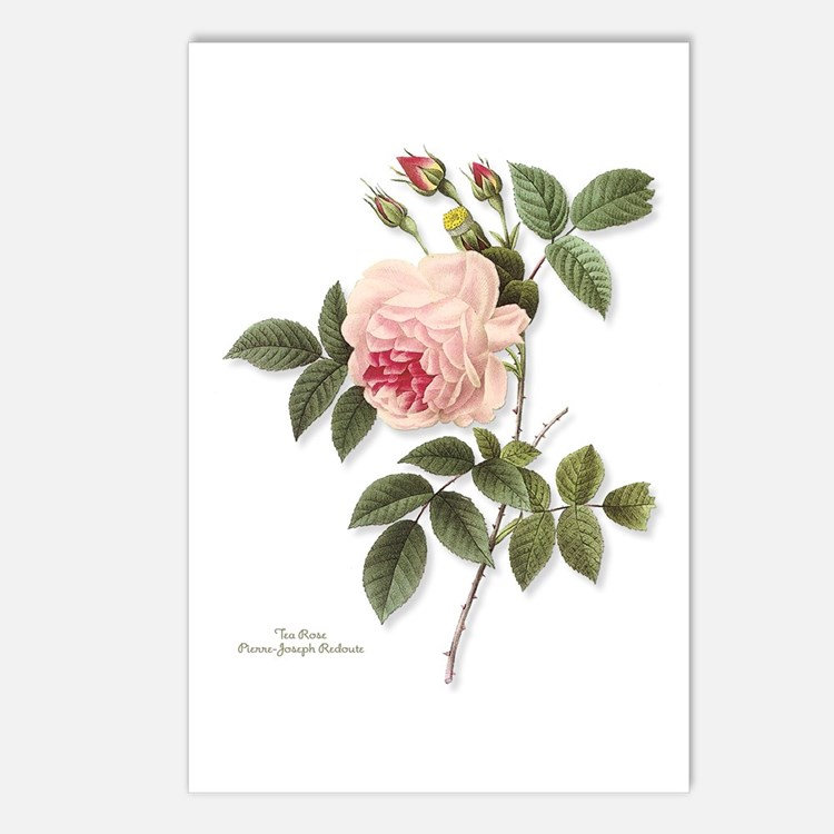 Tea Rose Postcards (Package of 8)