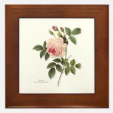 Tea Rose Framed Tile
