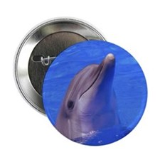 """""""Friendly Dolphin"""" 2.25"""" Button (10 pack)"""