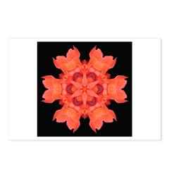 Canna Lily I Postcards (Package of 8)