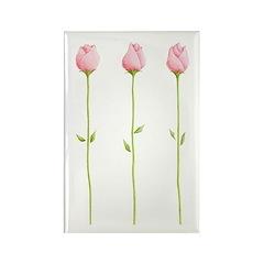 3 Pink Rosebuds Rectangle Magnet (10 pack)