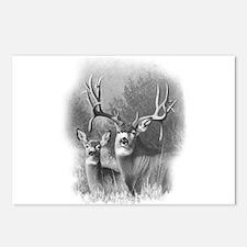 Mule Deer Postcards (Package of 8)