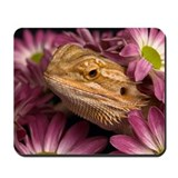 Bearded dragon Classic Mousepad