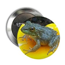 "Leopard Frog 2.25"" Button"
