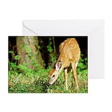 Deer DE002-2 Greeting Cards (Pk of 10)