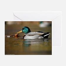 Mallard D1130-003 Greeting Cards (Pk of 10)