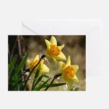 Blank Daffodil Greeting Cards (Pk of 10)