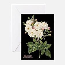 Blush Noisette Rose Greeting Cards (Pk of 10)