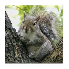 Tree Squirrel Tile Coaster