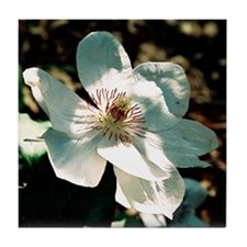 Clematis - Tile Coaster