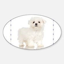 Maltese Puppy Oval Decal