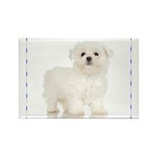 Maltese Puppy Rectangle Magnet