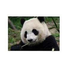 Unique Giant panda Rectangle Magnet