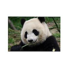 Cute Giant pandas Rectangle Magnet