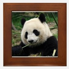 Cool Panda bears Framed Tile