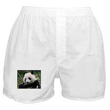 Unique Cute panda Boxer Shorts