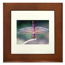 Dragonfly photo Framed Tile