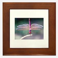 Dragonfly photo Framed Tile