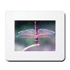 Dragonfly photo Mousepad