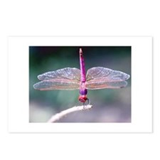 Dragonfly photo Postcards (Package of 8)