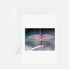 Dragonfly photo Greeting Cards (Pk of 10)