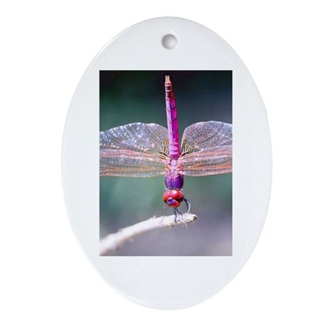 Dragonfly photo Oval Ornament