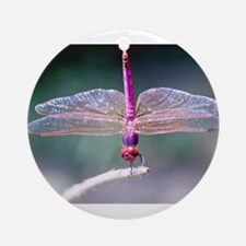 Dragonfly photo Ornament (Round)
