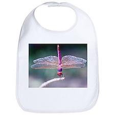 Dragonfly photo Bib