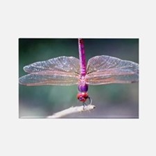 Dragonfly photo Rectangle Magnet