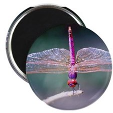 """Dragonfly photo 2.25"""" Magnet (100 pack)"""