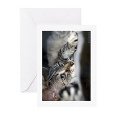 Feline  Boredom Greeting Card