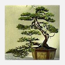 Cypress Tile Coaster