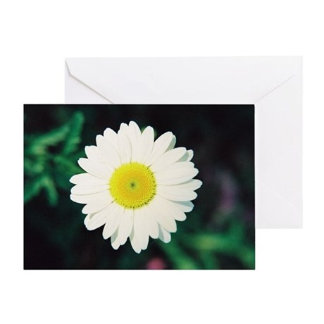Daisy - Greeting Card