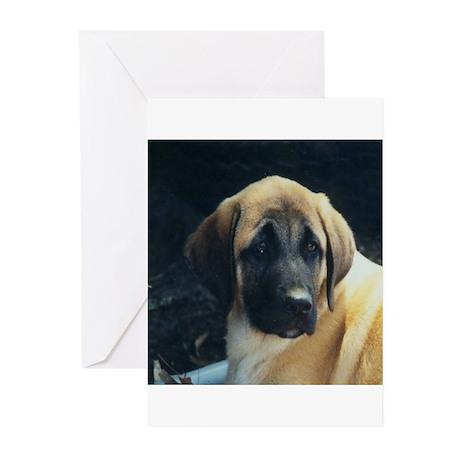 Anatolian Shepherd Dog Greeting Cards (Package of