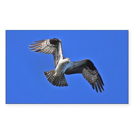 Osprey Rectangle Sticker