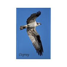 Osprey Rectangle Magnet