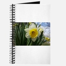 Yellow and White Daffodil Journal