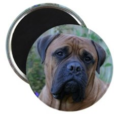 Thoughtful Bull Mastiff Magnet