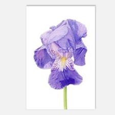 Purple Iris Postcards (Package of 8)