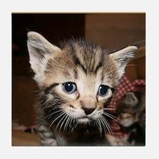 Cute Kitten Tile Coaster