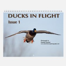 Ducks in Flight, Vol 1 Wall Calendar